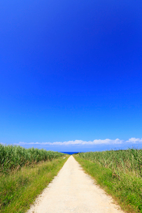 沖縄・波照間島 サトウキビ畑と道の写真素材 [FYI01792522]