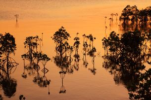 沖縄・石垣島 名蔵湾のマングローブ林と夕焼けに染まる海の写真素材 [FYI01792585]
