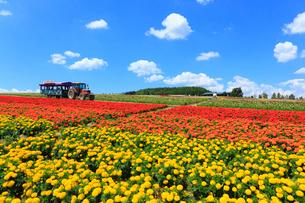 フラワーランドかみふらの トラクターバスと花畑の写真素材 [FYI01792612]