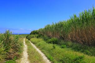 沖縄・波照間島 サトウキビ畑と道の写真素材 [FYI01792647]