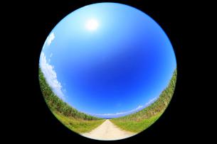 沖縄・波照間島 サトウキビ畑と道に太陽の写真素材 [FYI01792658]