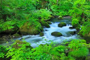 新緑の奥入瀬渓谷 阿修羅の流れの写真素材 [FYI01792679]