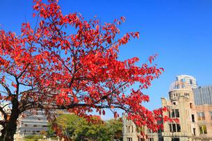 平和記念公園の紅葉と原爆ドームの写真素材 [FYI01792722]