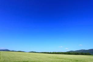 ソバ畑と青空の写真素材 [FYI01792767]