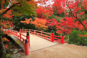 宮島 紅葉谷公園の写真素材 [FYI01792771]