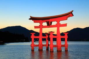 宮島 大鳥居のライトアップと夕焼け空の写真素材 [FYI01792792]