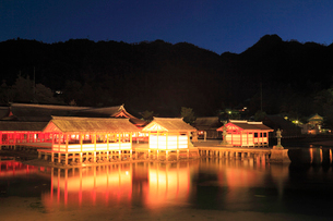 宮島 厳島神社のライトアップ夜景の写真素材 [FYI01792847]