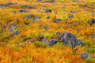 秋吉台の草紅葉の写真素材 [FYI01792921]