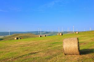 宗谷岬ウインドファームと牧草ロールの写真素材 [FYI01792967]