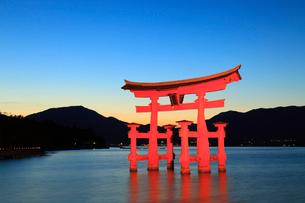 宮島 大鳥居のライトアップと夕焼け空の写真素材 [FYI01792990]