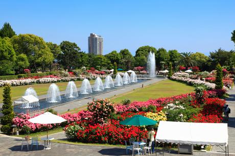 須磨離宮公園・噴水広場のバラ園の写真素材 [FYI01793016]