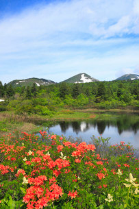 睡蓮沼と八甲田連峰の写真素材 [FYI01793020]