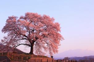 朝焼けの八ヶ岳 わに塚のサクラの写真素材 [FYI01793053]