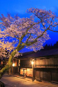 妻籠宿のサクラ ライトアップ夜景の写真素材 [FYI01793054]