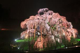 三春の滝桜 ライトアップ夜景の写真素材 [FYI01793073]