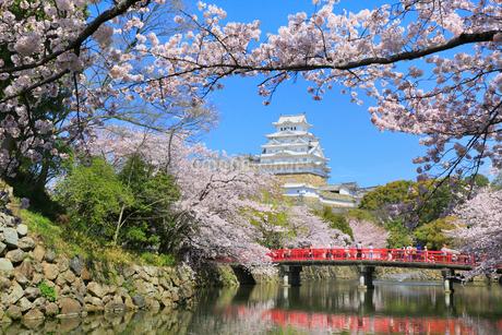 姫路城のサクラの写真素材 [FYI01793080]