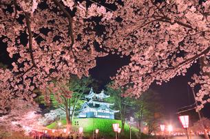 高田公園の桜 ライトアップ夜景の写真素材 [FYI01793166]