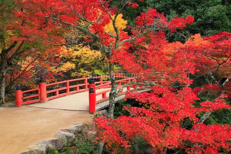 宮島 紅葉谷公園の写真素材 [FYI01793253]