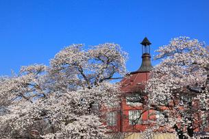 清春芸術村とサクラの写真素材 [FYI01793278]