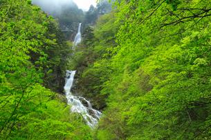 精進ヶ滝と新緑に霧の写真素材 [FYI01793359]