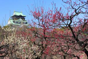 大阪城と梅林の写真素材 [FYI01793409]