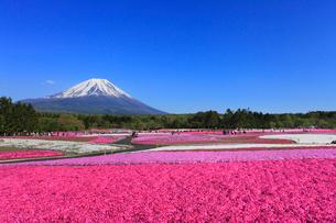富士本栖湖リゾートのシバザクラと富士山の写真素材 [FYI01793433]
