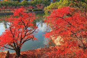 広島城 堀と紅葉の写真素材 [FYI01793464]