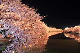 弘前公園,サクラのライトアップ夜景の写真素材 [FYI01793475]