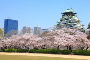大阪城とサクラ 西の丸庭園 の写真素材 [FYI01793485]