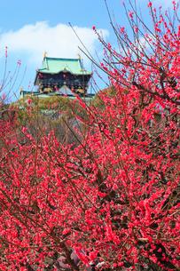 大阪城と梅林の写真素材 [FYI01793492]