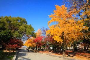 平和記念公園の紅葉の写真素材 [FYI01793499]