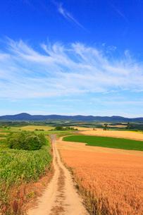 美瑛・パッチワークの丘と道の写真素材 [FYI01793560]