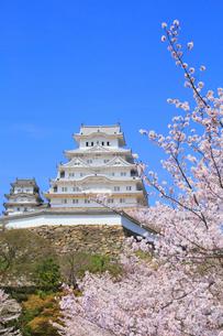 姫路城のサクラの写真素材 [FYI01793586]