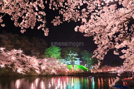 高田公園の桜 ライトアップ夜景の写真素材 [FYI01793602]