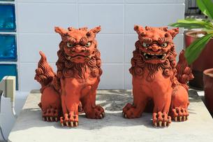 慶良間諸島,座間味島,シーサーの置物の写真素材 [FYI01793639]