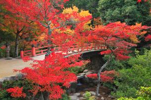 宮島 紅葉谷公園の写真素材 [FYI01793641]