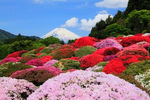 富士山とツツジ園の写真素材 [FYI01793748]