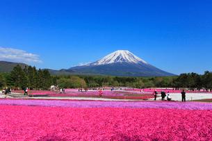 富士本栖湖リゾートのシバザクラと富士山の写真素材 [FYI01793767]