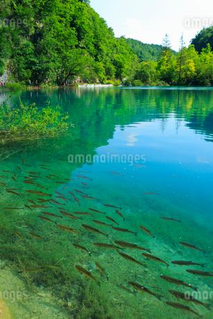 プリトゥヴィツェ湖群国立公園の写真素材 [FYI01793791]