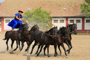 ホルトバージ国立公園の馬術ショーの写真素材 [FYI01793917]