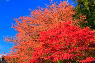 高野山の紅葉 の写真素材 [FYI01794184]
