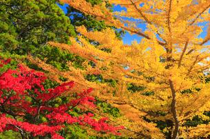 高野山の紅葉 の写真素材 [FYI01794202]