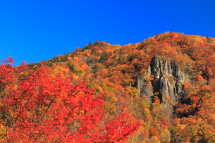 定山渓の紅葉の写真素材 [FYI01794271]