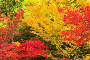 高野山の紅葉の写真素材 [FYI01794281]