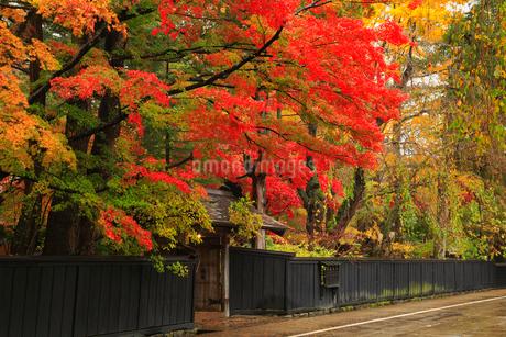 角館の武家屋敷と紅葉の写真素材 [FYI01794465]
