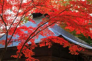 中尊寺の紅葉の写真素材 [FYI01794477]