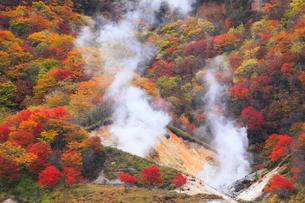 登別・地獄谷の紅葉の写真素材 [FYI01794489]