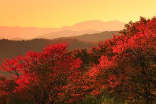 田沢湖高原の紅葉と夕焼けの写真素材 [FYI01794568]