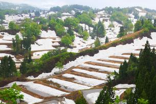 残雪の棚田と新緑の写真素材 [FYI01794578]
