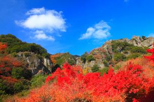 小豆島・寒霞渓の紅葉の写真素材 [FYI01794590]